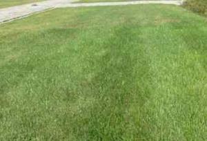 grindgras pesticidendecreet